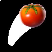 Tomato